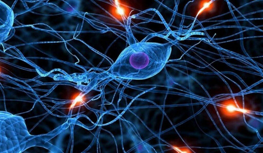 Como regenerar el cerebro con estas frutas y sus compuestos