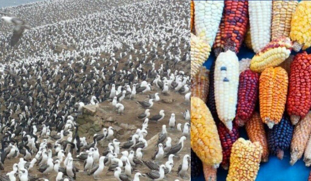 Hallazgo clave de superfertilizante del guano en el desierto de Chile