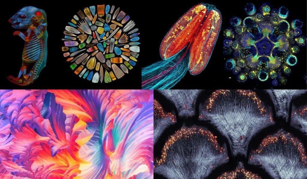 Premio Olympus 2020: Las mejores imágenes tomadas por microscopio