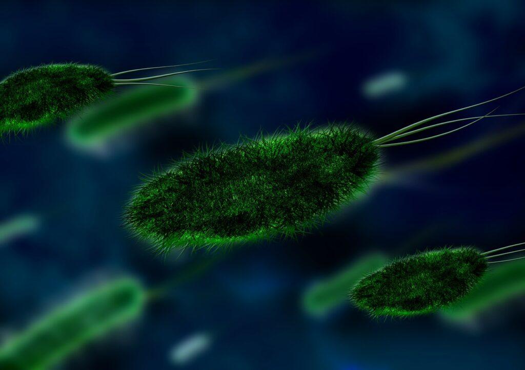 Staphylococcus aureus, una bacteria que amenaza a los sere humanos