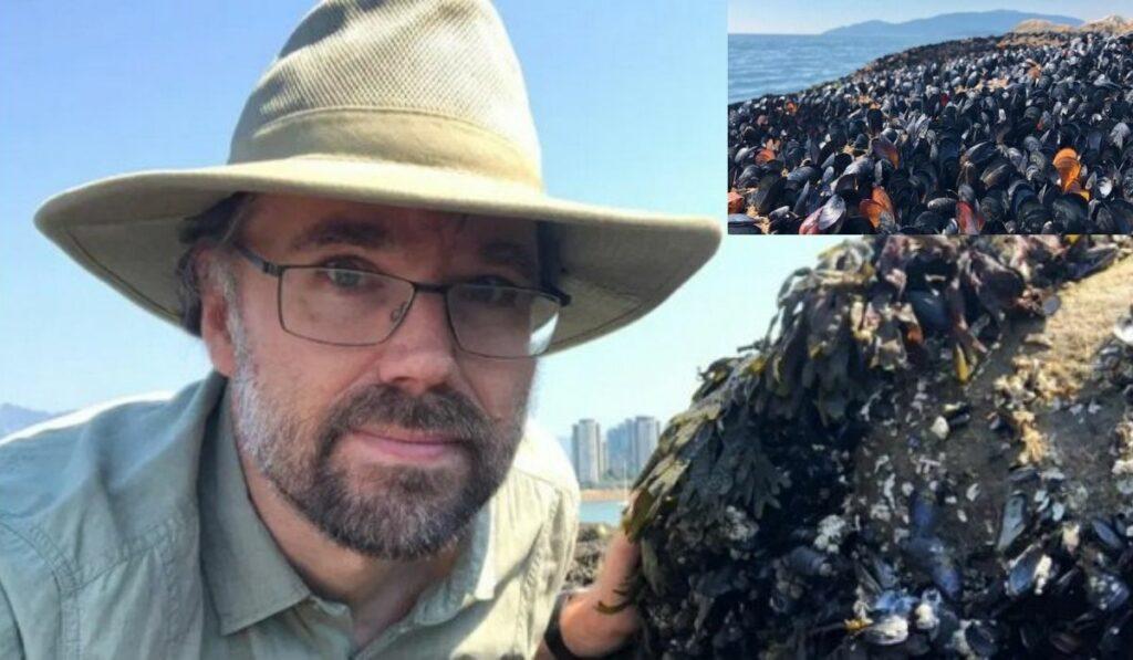 Ola de calor acabó con una población de mejillones en playa de Vancouver