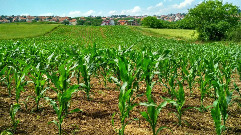 referente mundial de la agricultura social y sostenible