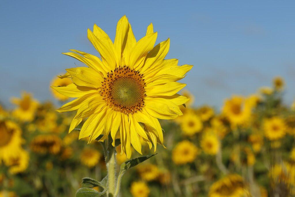 las flores regular la temperatura