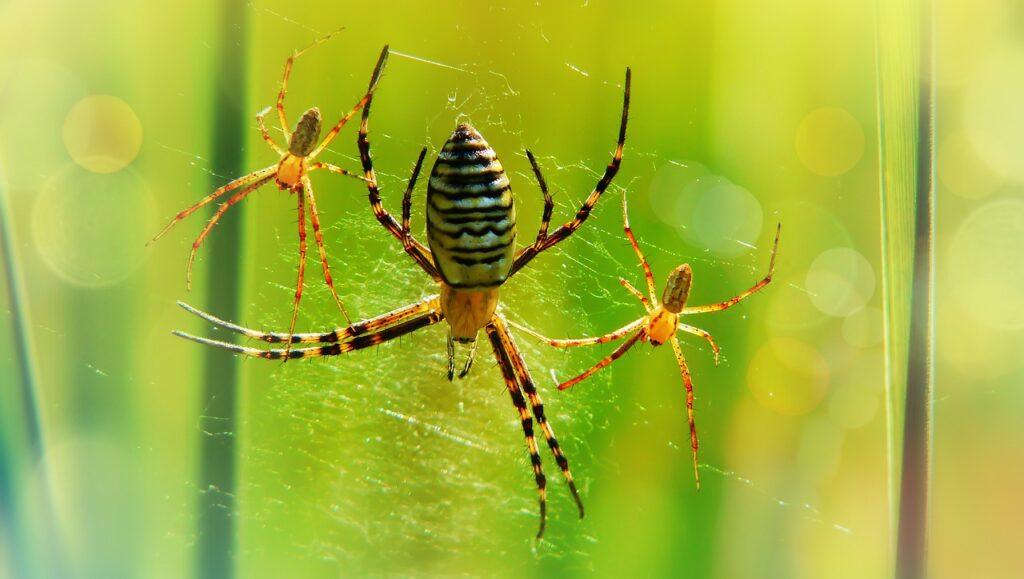 La cooperación en los grupos de insectos lleva a la especialización de tareas