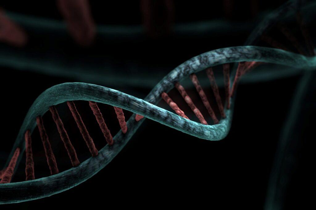 cómo las bacterias logran realizar la reparación del ADN