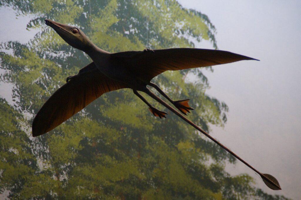 Retoman el hallazgo de los restos fósiles del dragón volador de Atacama